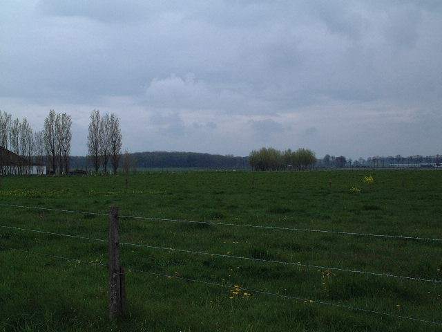 Houtholst Forest near Ypres